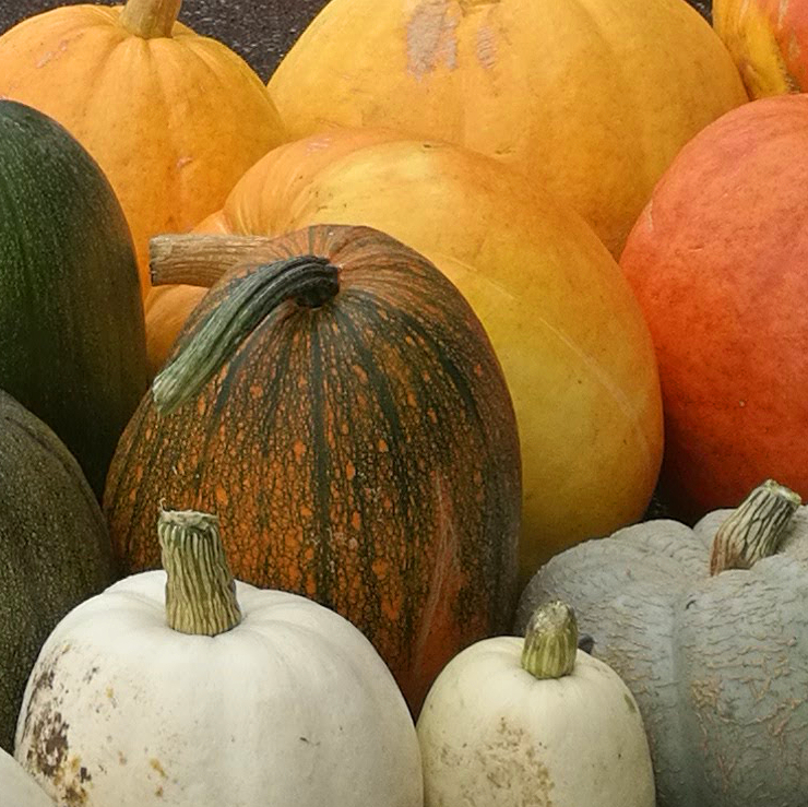 Pumpkin and Apple Sale