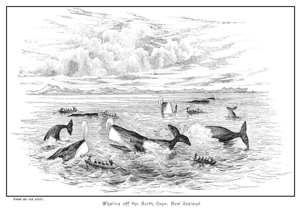 Unknown artist, Whaling off the North Cape, New Zealand. From the book Early History of New Zealand Brett's Historical Series: From Earliest Times To 1840-1845(link is external: https://collections.tepapa.govt.nz/object/1416863), by Richard Arundell Augur Sherrin and J. H. Wallace, edited by Thomson W. Lays (or Leys), 1890, book. Gift of Charles Rooking Carter. Te Papa (RB000042)