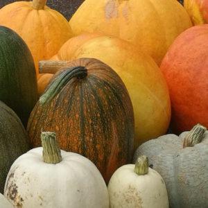 Orange pumpkins, white pumpkins, green pumpkins. Fall happiness gourd shaped!